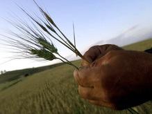 Тимошенко будет регулировать цены на сахар и зерновые