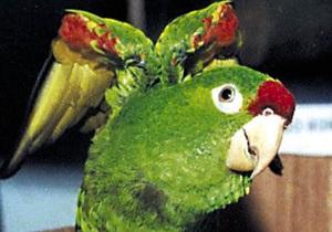 Американка потратила $75 тысяч на лечение попугая
