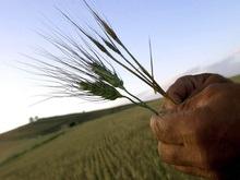 В Украине сложилась критическая ситуация на рынке зерна