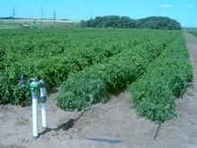 Эксперты: Пестициды не портят экологичность продуктов