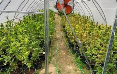 Конопли в киеве как вырастить семя конопли