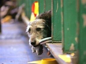 В России родители  девочки-маугли , которую воспитали собаки, лишены прав на дочь
