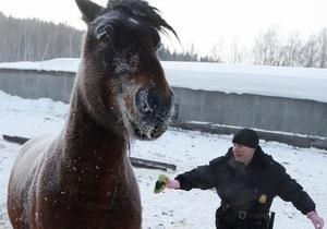 На кольцевой дороге Санкт-Петербурга поймали табун лошадей