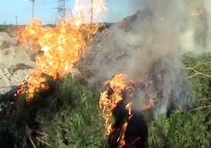 В Киевской области милиция уничтожила плантацию конопли стоимостью 2,5 млн грн