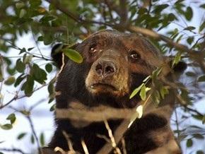 На Прикарпатье раненый медведь разорвал браконьера