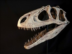Ученые выяснили, из чего состояли тираннозавры