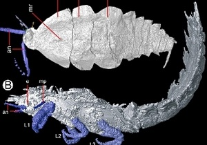 Палеонтологи сделали томографию предку тараканов и богомолов