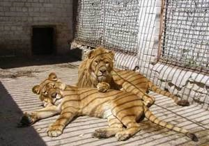 В Черкасском зоопарке животных от жары спасают обливанием водой