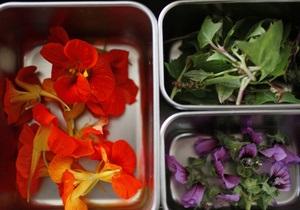 На грибах и одуванчиках. В мире набирает популярность еда из дикорастущих растений