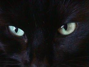 У китайского мальчика-кота в темноте светятся глаза