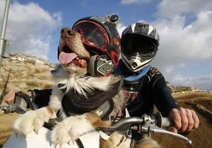Фотогалерея: Собака-мотогонщик