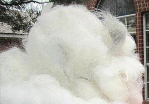 В Техасе планируют скатать гигантский комок из собачьей шерсти