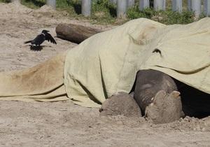 Экспертная комиссия подтвердила версию об отравлении слона в Киевском зоопарке