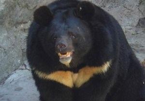 Экс-сотрудники киевского зоопарка заявляют, что в смерти уссурийского медведя виновато руководство зверинца