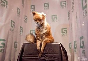 В Петербурге открылась выставка Упоротого лиса