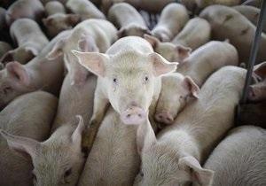На Прикарпатье из-за пожара в свинарнике погибло 800 свиней
