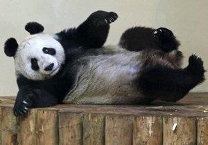 В список Лиц 2011 года по версии Би-би-си попала панда