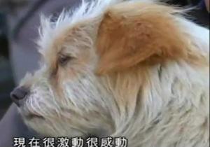 В Китае дворняга прибилась к группе велосипедистов и преодолела путь в две тысячи км