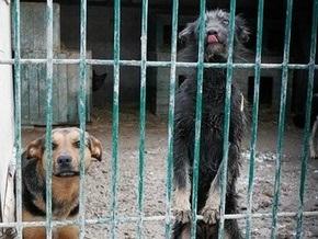 Киевский приют для собак в Бородянке возглавил более гуманный директор
