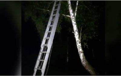 На Львівщині дитина залізла на восьмиметрове дерево, бо рятувалася від булінгу