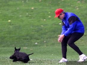 Собака Буша покусала журналиста
