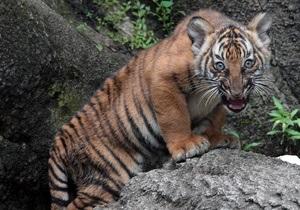 В зоопарке Нью-Йорка на посетителя напал тигр