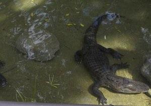 Житель США украл аллигатора, спрятав его под футболку
