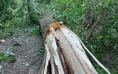 Во Львове во время урагана погибли два человека