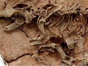 На австралийской овцеферме обнаружены торчащие из земли кости динозавра