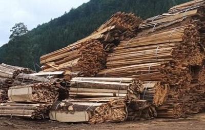 На Буковине в заповедном фонде вырубили леса на миллионы гривен