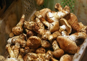 В Донецкой области мужчина, собирая грибы, обнаружил 250-киллограммовую авиабомбу