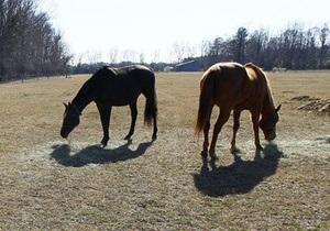 В Житомирской области неизвестные ради забавы расстреляли пасущихся лошадей