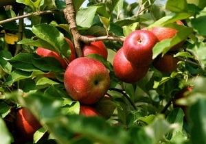 Американские ученые создали детектор спелости фруктов
