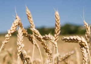 Украина намерена увеличить экспорт зерна