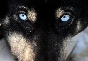 В США согласно завещанию женщины ее пса усыпили и похоронили с ней