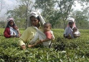 Мировые цены на чай могут вырасти