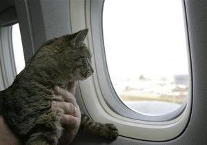 Новости США - новости о животных: В США бездомный собирается вернуть хозяину кошку, с которой он путешествовал десять месяцев
