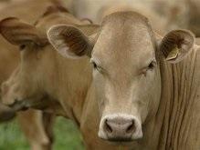 Из-за нехватки мяса в Украине закрываются мясокомбинаты