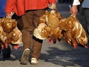 В Индонезии четыре человека умерли от птичьего гриппа