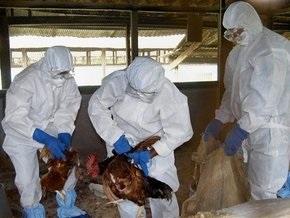 В Индии обнаружен птичий грипп