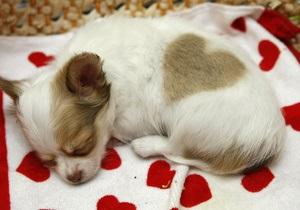 21% людей хотят провести День Валентина с животными