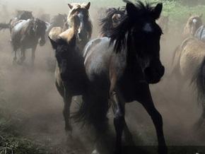 Во Львове кони затоптали автомобиль с людьми