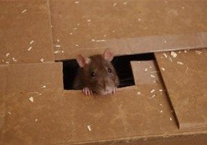 В Киеве проверят жилые дома на наличие крыс и мышей