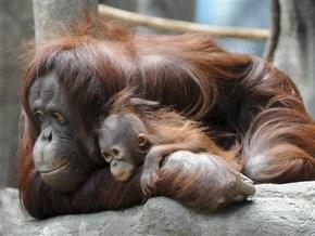 В Киевском зоопарке обезьян отправили на карантин