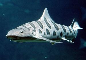 В США на поле для гольфа обнаружили живую акулу