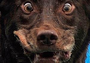 Киевских почтальонов учат обороняться от бездомных собак