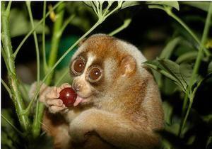На рынке в Индонезии обнаружили 50 редких обезьян