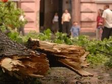 Фотогалерея: Львовский ураган