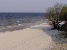 В Днепре возле Новой Каховки погибло 100 тонн рыбы