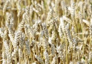 Эксперты прогнозируют снижение урожая до 40 млн тонн из-за засухи